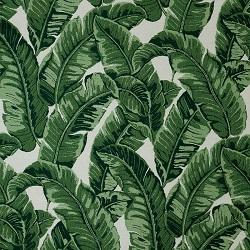 Tropics Jungle
